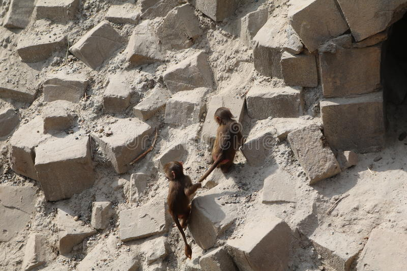 Jogo do macaco fotos de stock royalty free