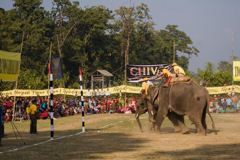 Jogo do polo dos elefantes, em Thakurdwara, Bardia, Nepal imagem de stock