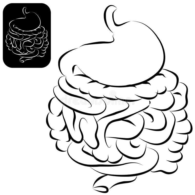 Jogo do sistema digestivo ilustração royalty free