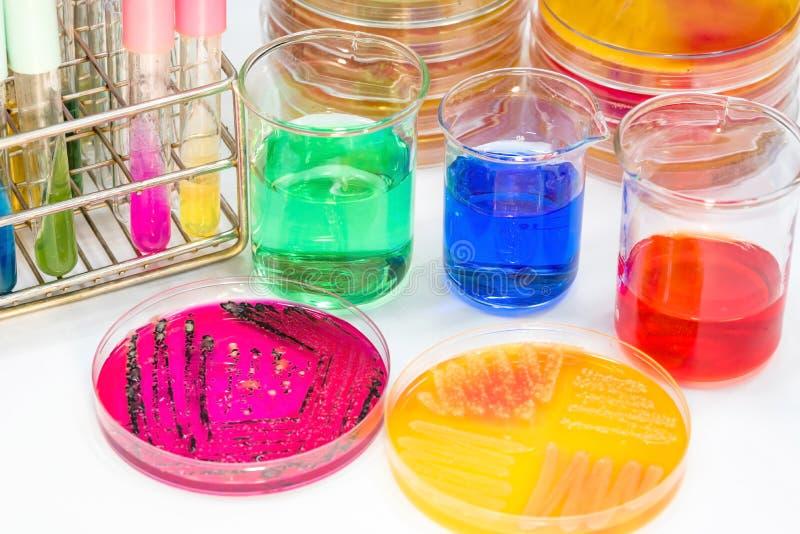 Jogo do teste do Biochem e meios e coleção do sangue do tubo para o identifi imagem de stock royalty free