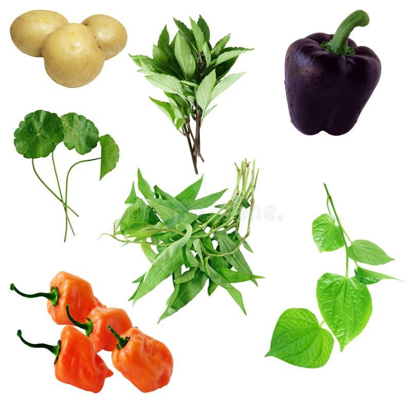 Jogo do vegetal foto de stock