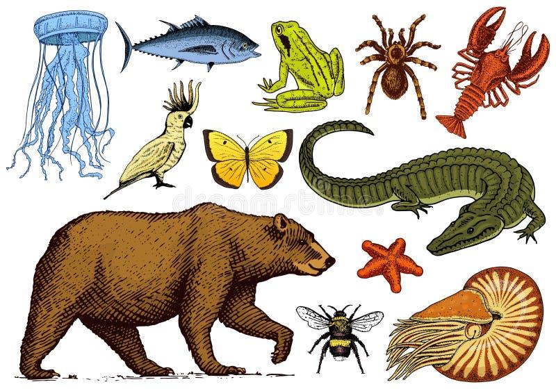 Jogo dos animais Inseto anfíbio do mamífero do réptil Aranha da lagosta dos peixes da borboleta do crocodilo das medusa do shell  ilustração do vetor