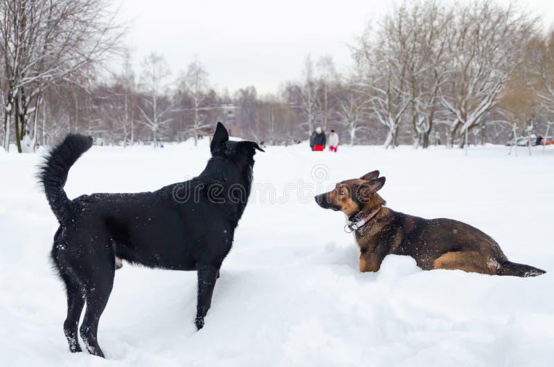 Jogo dos cães um com o otro foto de stock royalty free