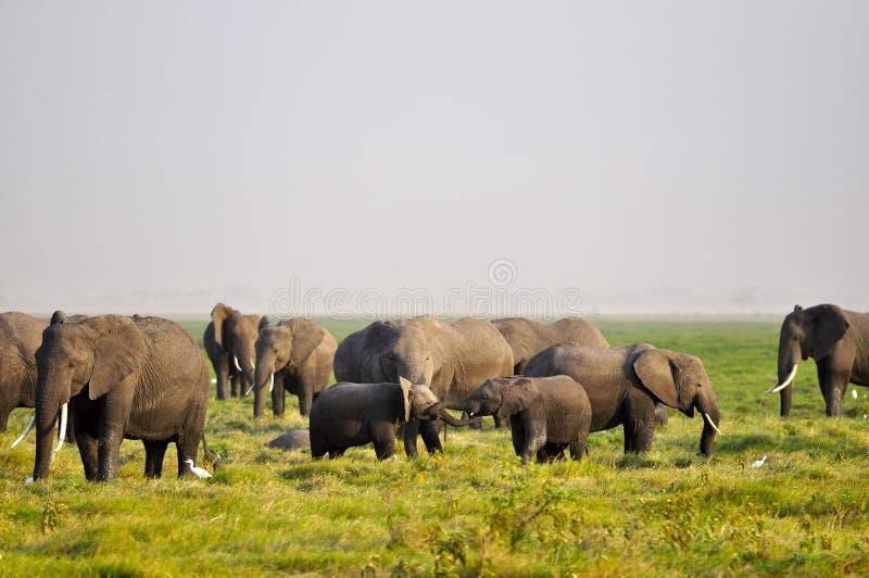 Jogo dos elefantes do bebê fotografia de stock royalty free