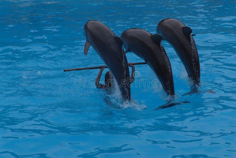 Jogo dos golfinhos imagem de stock