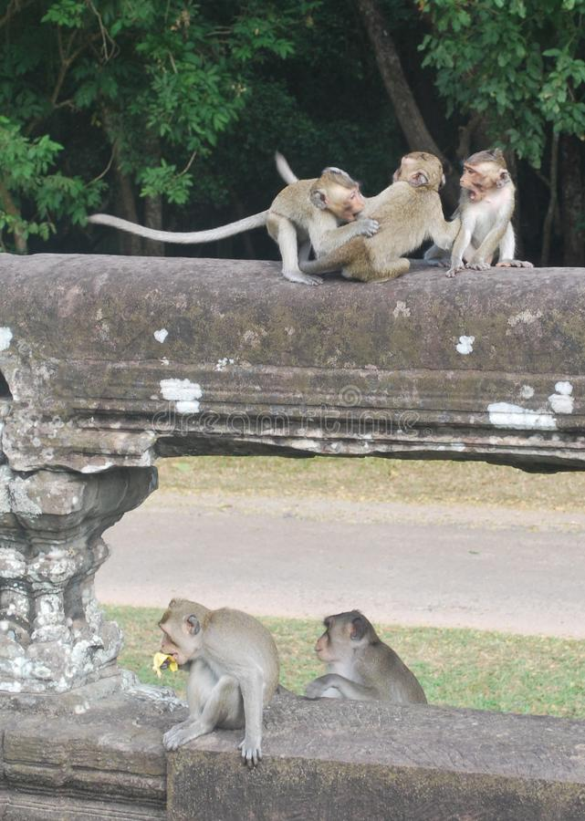 Jogo dos macacos imagens de stock