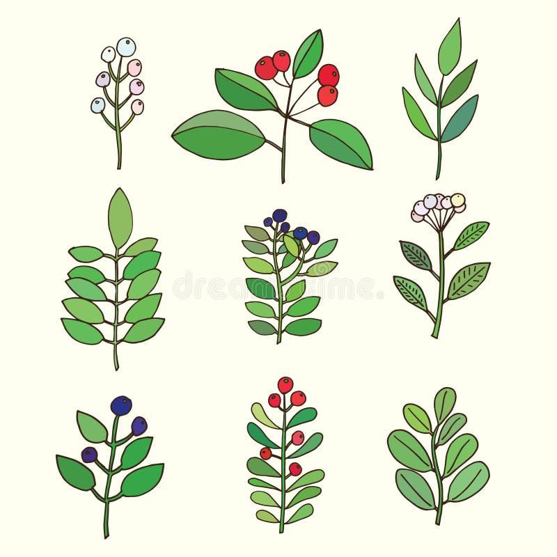 Jogo floral Coleção floral colorida com folhas e flores ilustração do vetor