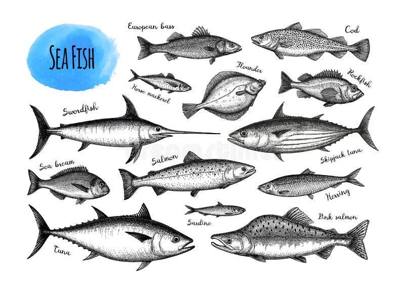 Jogo grande dos peixes ilustração stock