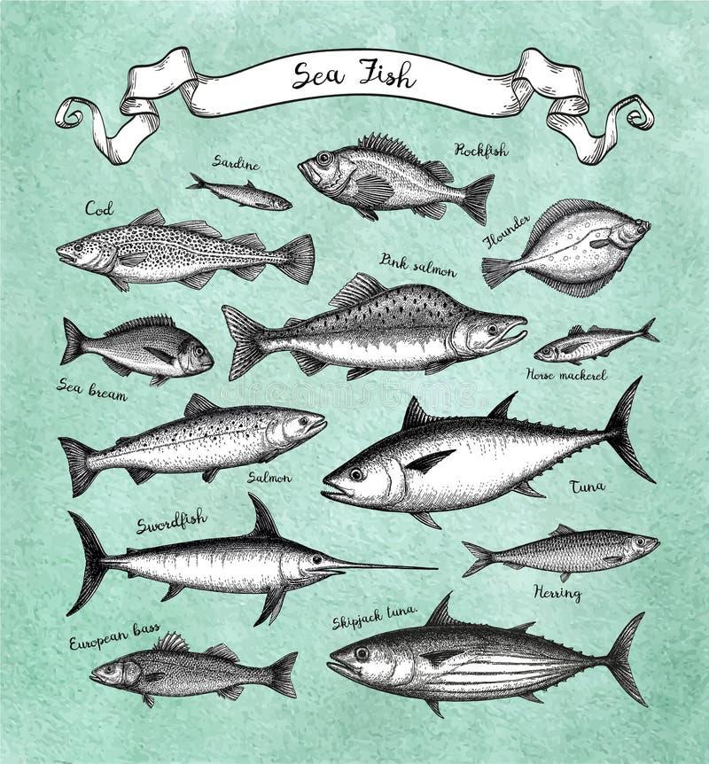 Jogo grande dos peixes ilustração do vetor