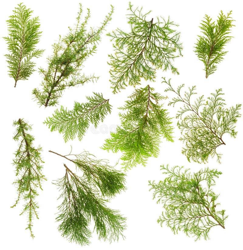 Jogo isolado filiais das plantas verdes fotografia de stock