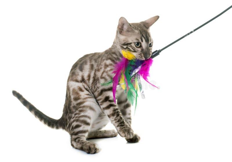 Jogo novo do gato de bengal imagens de stock