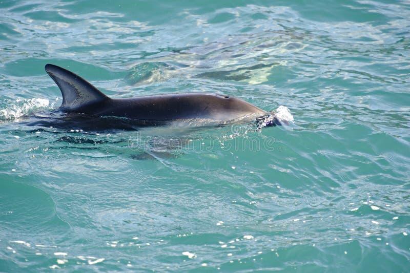 Jogo obscuro do golfinho imagens de stock royalty free