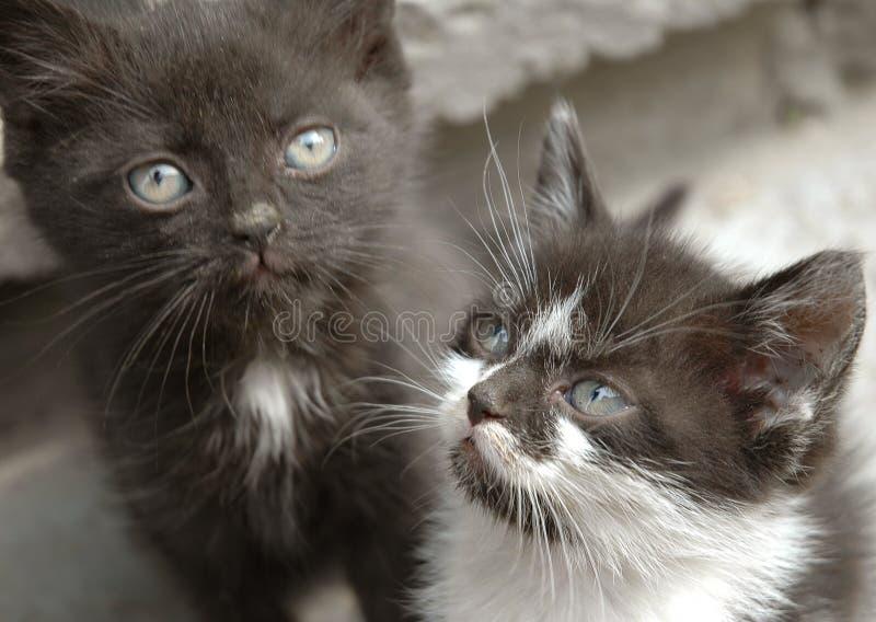Jogo pequeno de dois gatos fotos de stock