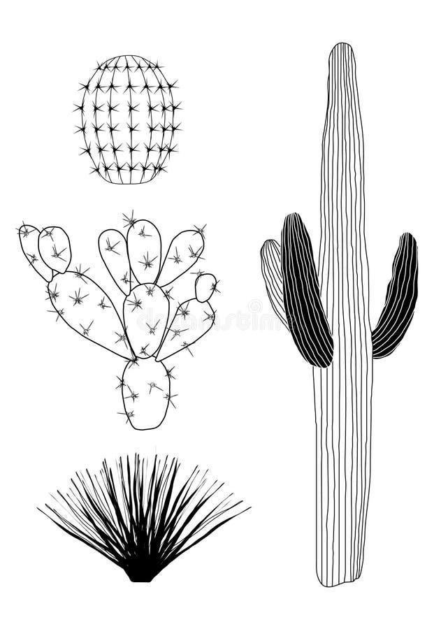 Jogo preto e branco do cacto do vetor ilustração royalty free