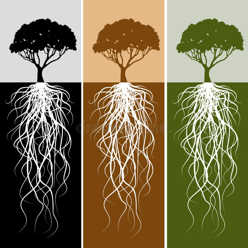 Jogo vertical da bandeira da raiz da árvore ilustração royalty free