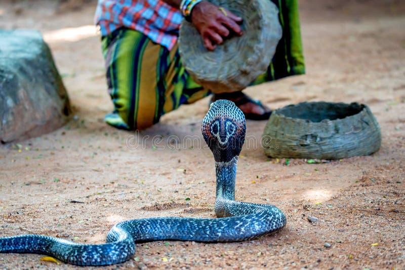 Jogos do encantador de serpente com cobra indiana fotos de stock royalty free