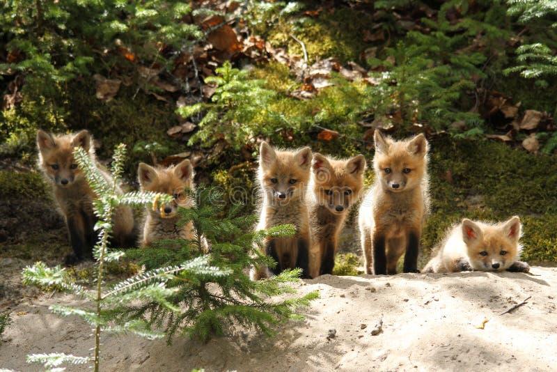 Jogos do Fox vermelho alinhados