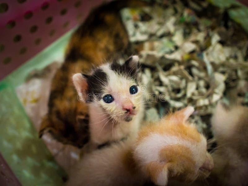 Jogos pequenos do gatinho na cesta fotos de stock