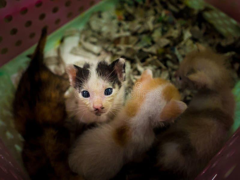 Jogos pequenos do gatinho na cesta fotografia de stock