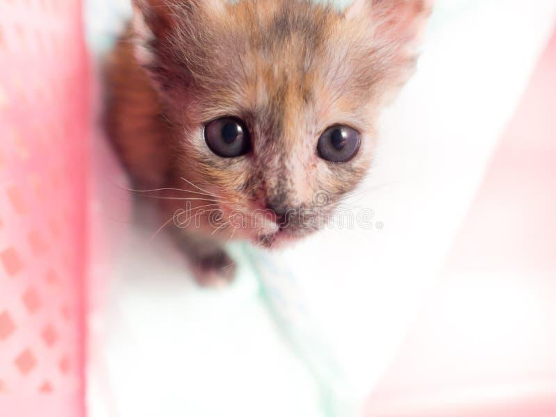 Jogos pequenos do gatinho na cesta foto de stock