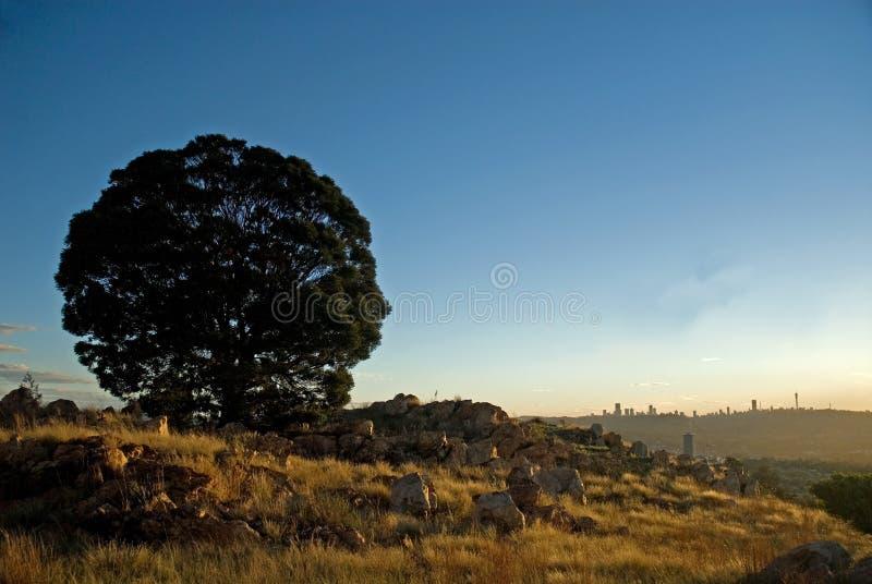 johannesburg silhouettetree arkivfoto