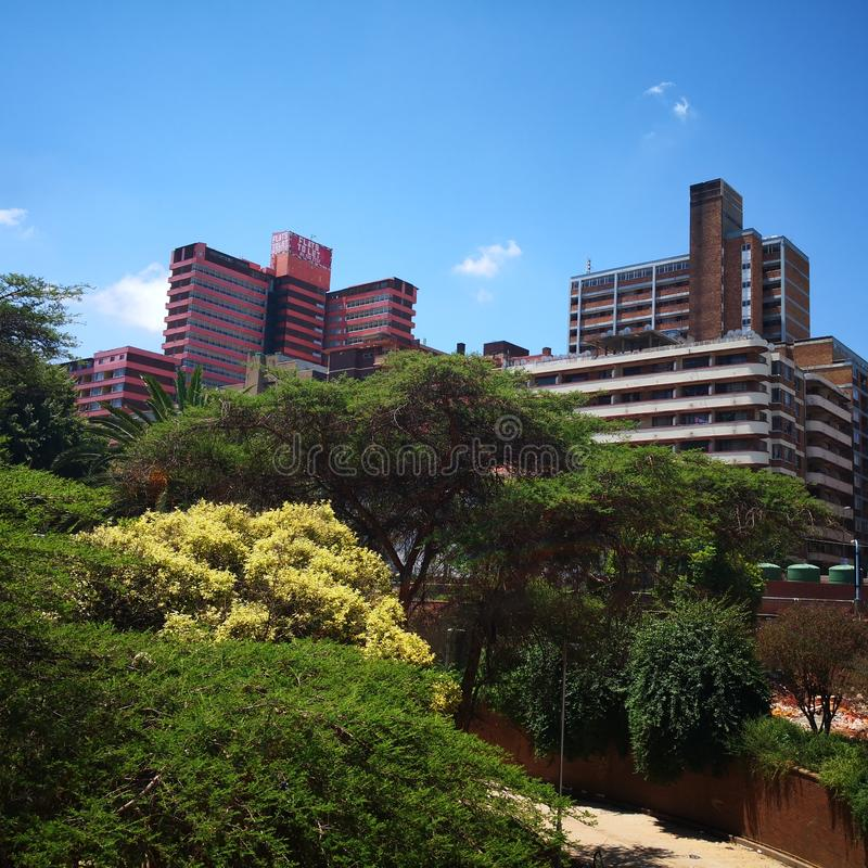 Johannesburg south Africa tall trees stock photography