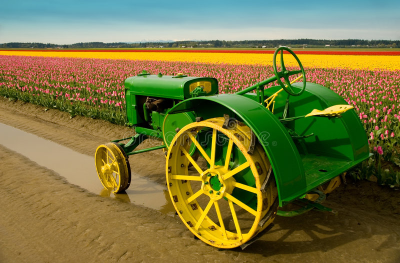 John Deere Tractor. Vintage John Deere tractor in the tulip fields of Skagit Valley, WA