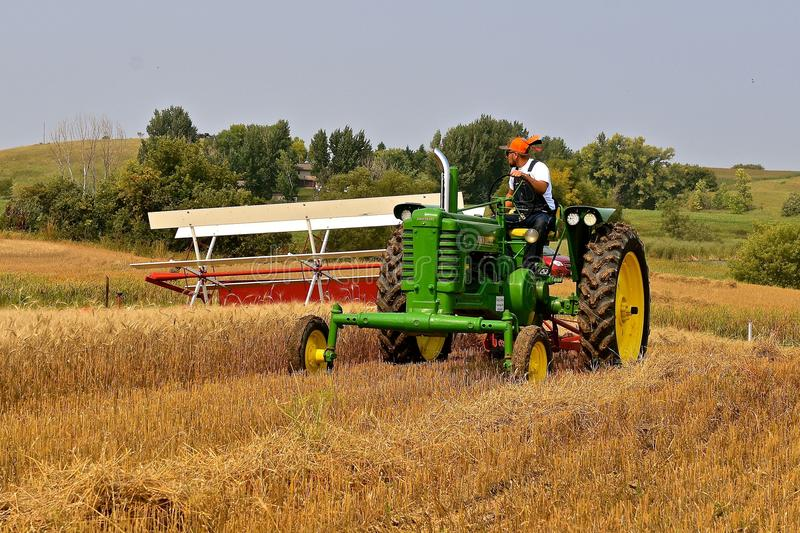John Dere tractor and swather harvesting wheat. ROLLAG, MINNESOTA, Sept 2, 2017: Unidentified operator of a John Deere B tractor and swather provide a field stock photography