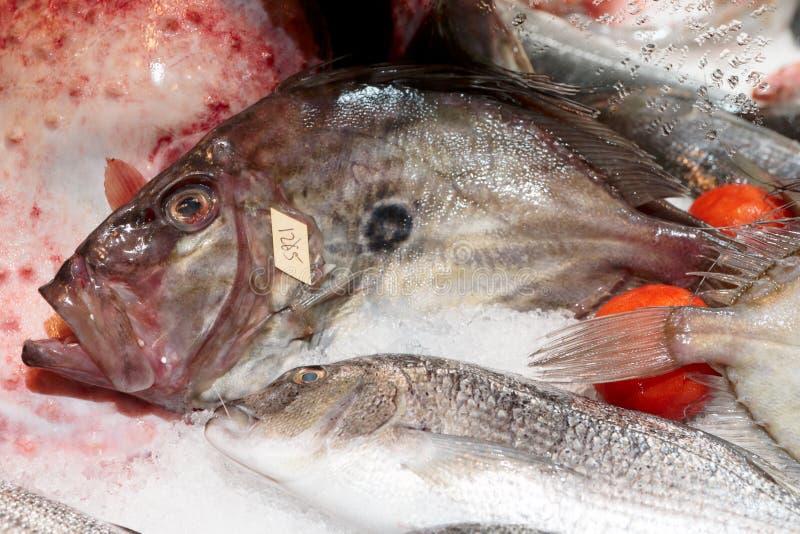John Dory-Fische auf Marktstall stockfotografie