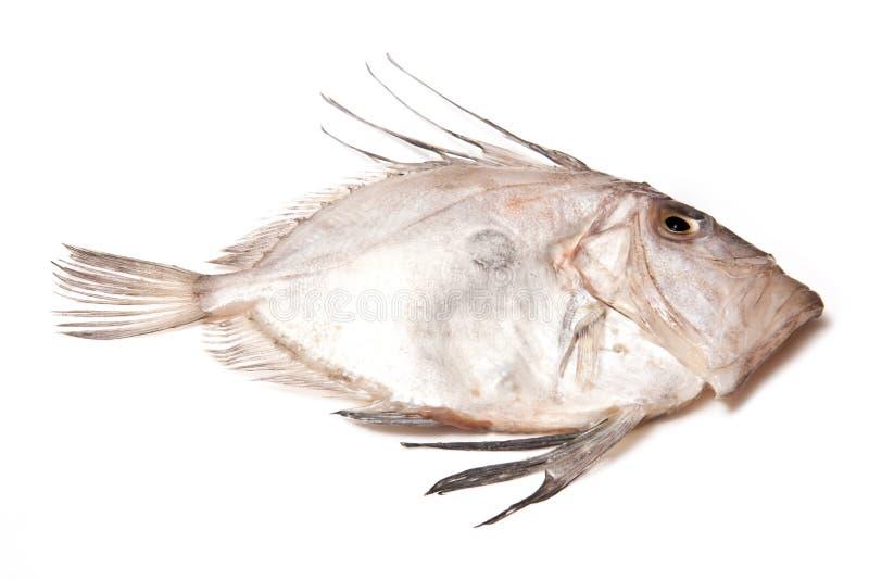 John-Ruderboot-Fische stockbilder