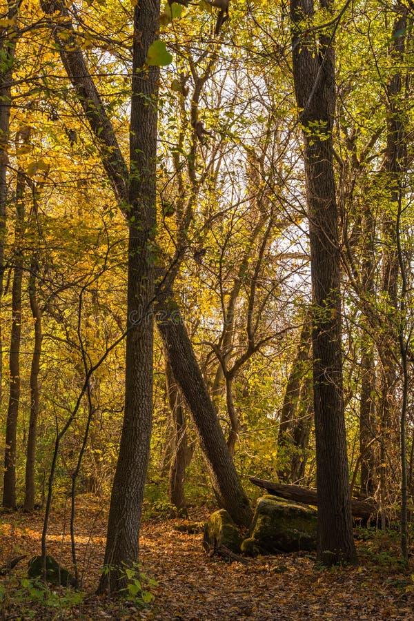 Johnson Trail royaltyfria foton