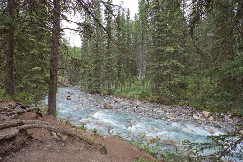 Johnston Canyon, Alberta royalty-vrije stock afbeelding