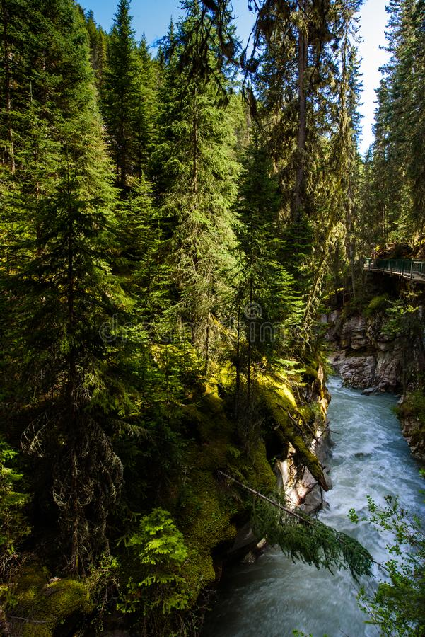 Johnston canyon in Banff national park, Alberta, Canda. Trees hanging over johnston canyon  near Banff in the canadian rockie mountains stock photos