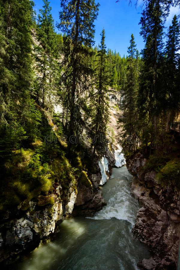 Johnston canyon in Banff national park, Alberta, Canda. Trees hanging over johnston canyon  near Banff in the canadian rockie mountains stock images
