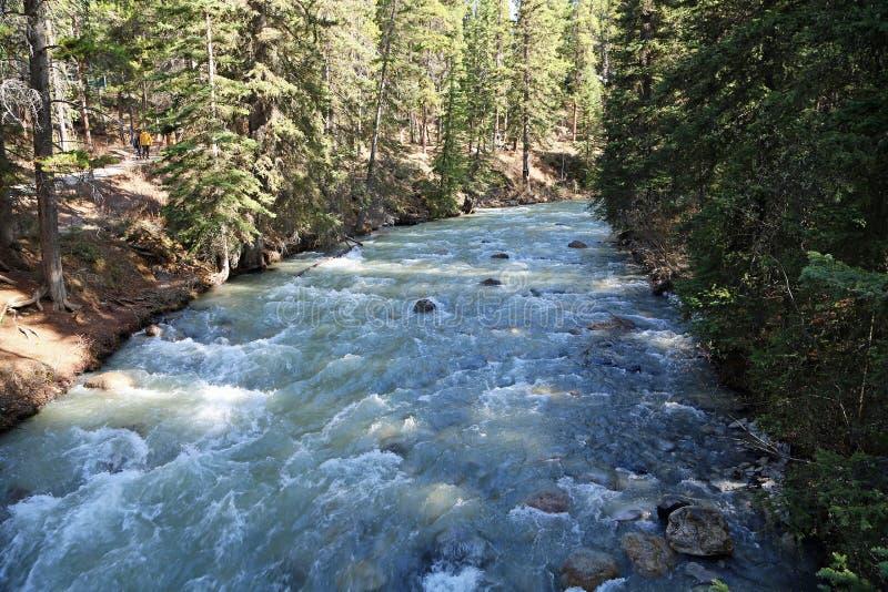 Johnston Creek stockbild