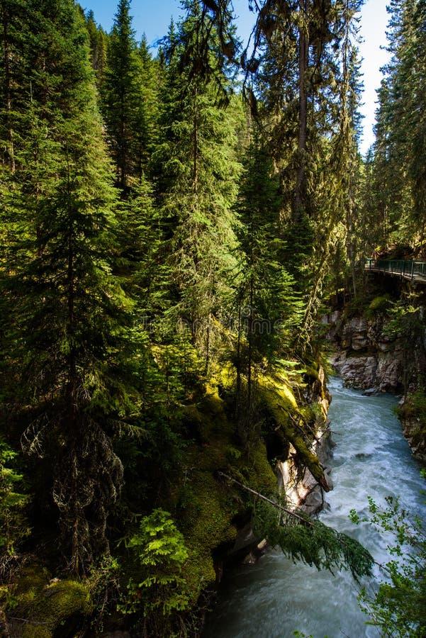 Johnstoncanion in het nationale park van Banff, Alberta, Canda stock foto's