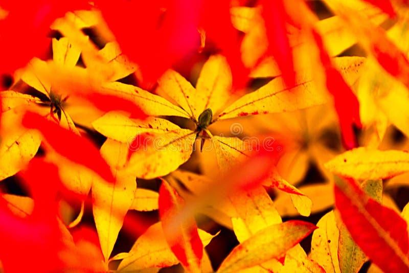 Joie d'automne photo libre de droits