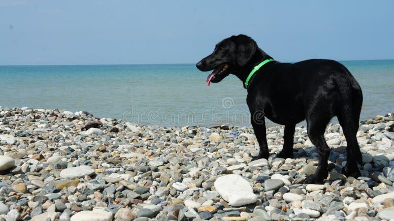 Joie de chien sur la plage images libres de droits