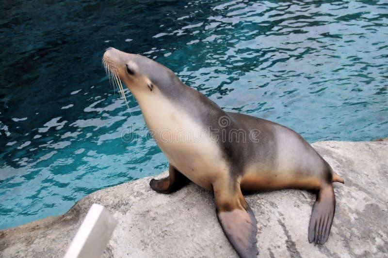 Joint au zoo de Taronga photographie stock