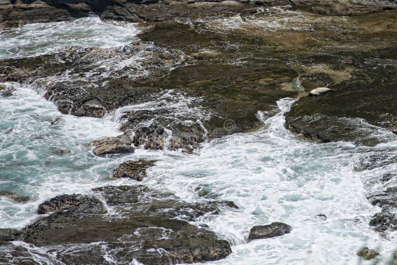 Joint détendant sur des roches en Hawaï Kauai photographie stock libre de droits