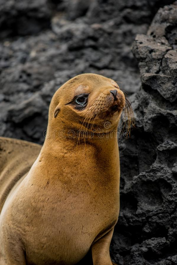 Joint dans Galapagos photo stock