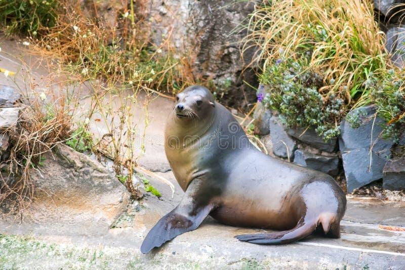 Joint dans le zoo, recherchant image libre de droits