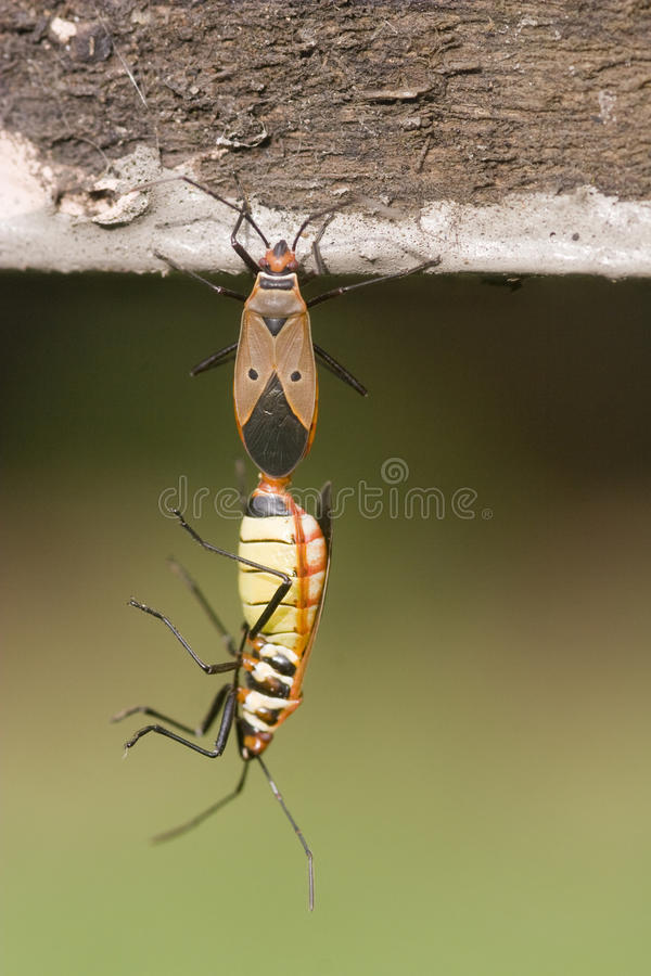 Joint insects stock images