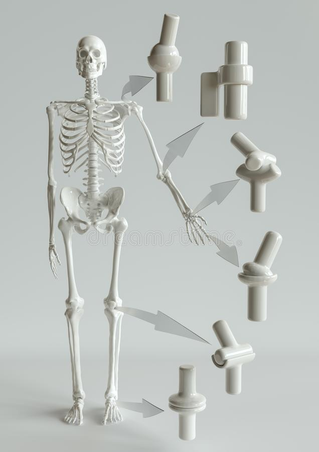 Joint types on the human skeleton - 3D Rendering vector illustration