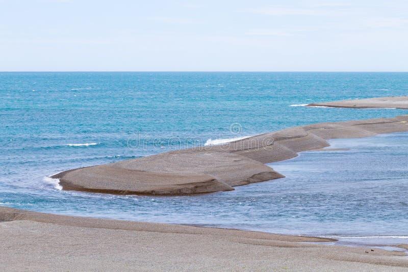 Joints d'?l?phant sur la plage de Caleta Valdes, Patagonia, Argentine images libres de droits