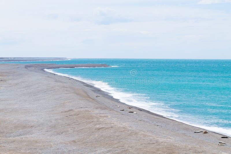 Joints d'?l?phant sur la plage de Caleta Valdes, Patagonia, Argentine photographie stock