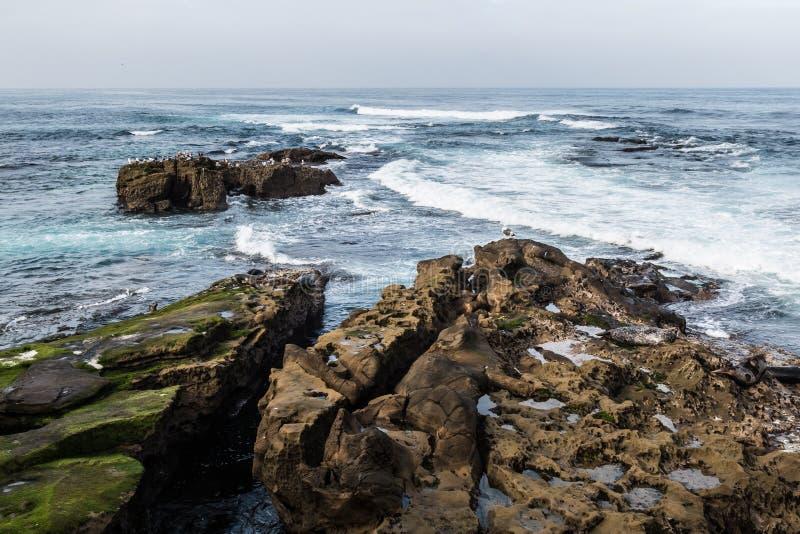Joints et mouettes sur des formations de roche à La Jolla, la Californie images stock