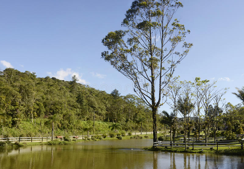 Joinville, Бразилия стоковое изображение rf