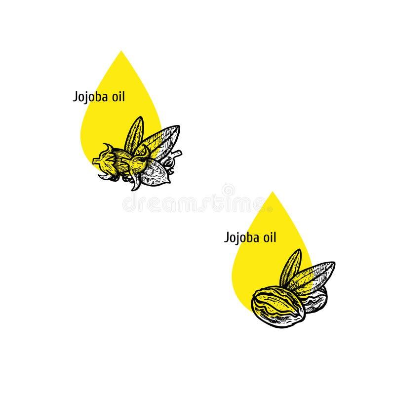 Jojoba σύνολο εικονιδίων πετρελαίου Συρμένο χέρι σκίτσο Εκχύλισμα των εγκαταστάσεων επίσης corel σύρετε το διάνυσμα απεικόνισης ελεύθερη απεικόνιση δικαιώματος