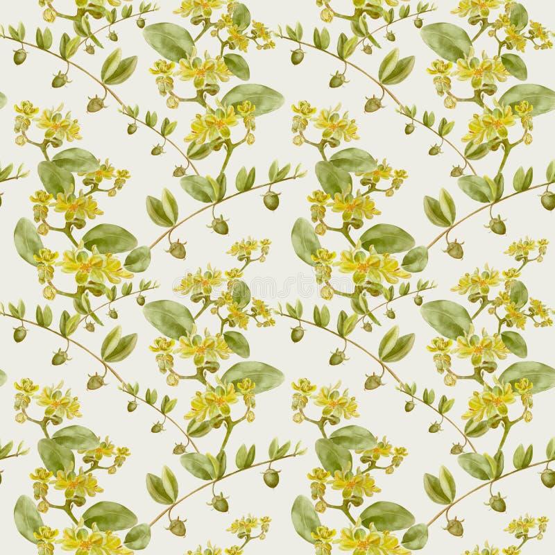 Jojoba - bloemen en vruchten Naadloze Achtergrond vector illustratie